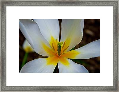 Framed Print featuring the photograph Inside The Tulip by Ed Cilley