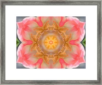 Inside Tulip Mandala Framed Print