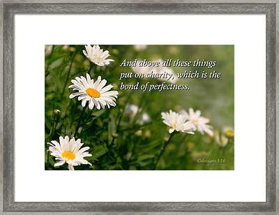 Inspirational - Daisy - Colossians 3-14 Framed Print