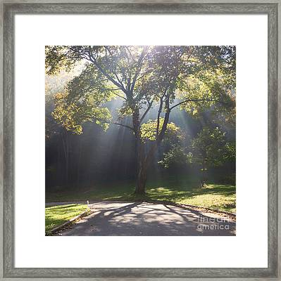 Inspirational Scene Sun Streaming Fog Square Framed Print