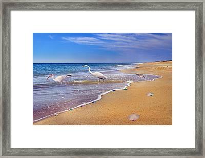 Inspiring Ibis Egret Sandpiper Starfish Sand Dollars  Framed Print