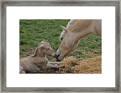 Instinct One Framed Print by Odd Jeppesen