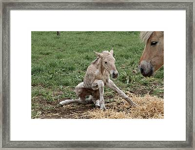 Instinct Two Framed Print by Odd Jeppesen