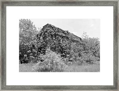 Insulation Bw  Framed Print by Elizabeth Sullivan