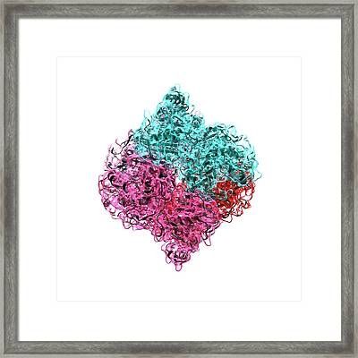 Insulin Molecule Framed Print