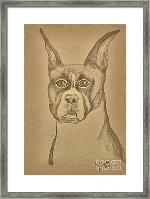 Intelligence - Boxer Framed Print