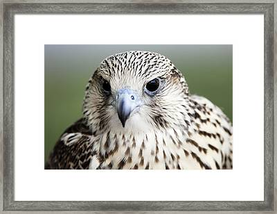 Framed Print featuring the photograph Intelligence by Dan Myers