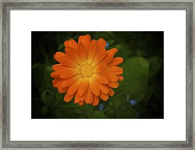 Intense Orange Framed Print by Terry Horstman