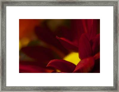 Intense Red Framed Print by Terry Horstman