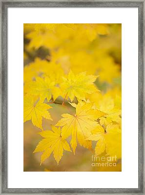 Intensely Yellow Framed Print by Anne Gilbert