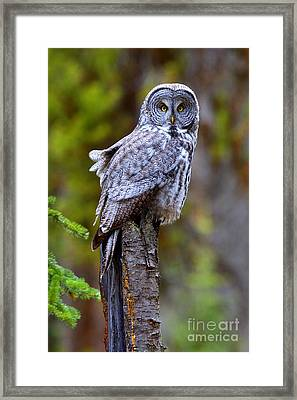Intent Framed Print