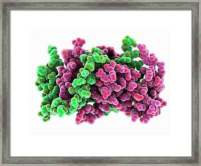 Interferon Gamma Molecule Framed Print by Laguna Design
