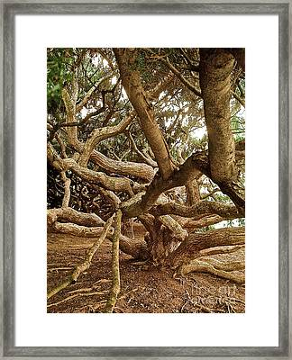 Interlacing Framed Print