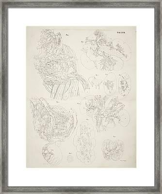 Internal Organs Framed Print by British Library