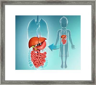 Internal Organs Of A Child Framed Print