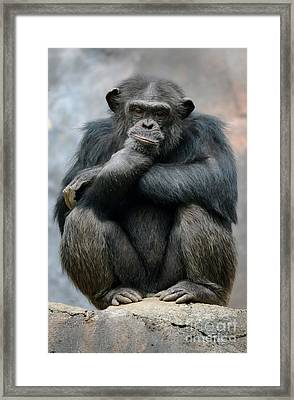 Internal Review Framed Print by Dan Holm