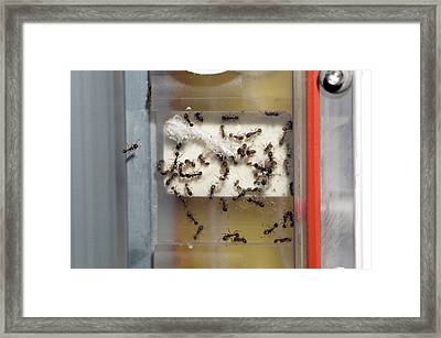 International Space Station Ant Research Framed Print