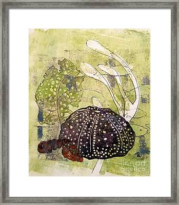 Intertidal Framed Print