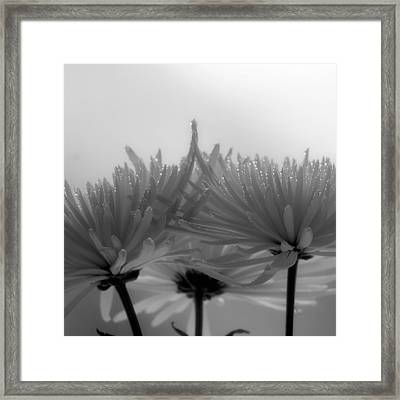 Intimacy Framed Print by Tom Druin