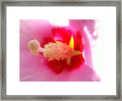 ...intimate... Framed Print