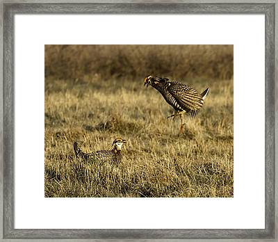 Intimidating Jump Framed Print