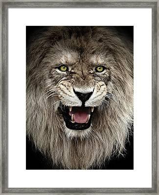 Intimidation Framed Print by Catalin Buzlea