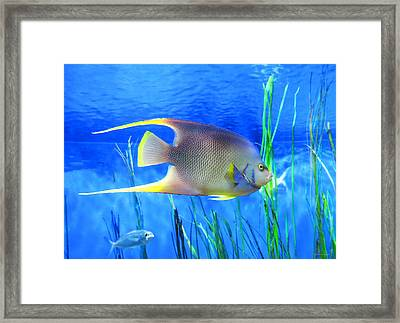 Into Blue - Tropical Fish By Sharon Cummings Framed Print