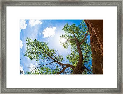 Into Its Eye Framed Print