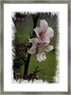 Framed Print featuring the photograph Into Spring Abstract by Lori Mellen-Pagliaro