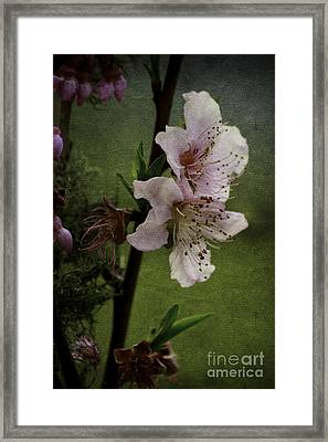 Framed Print featuring the photograph Into Spring by Lori Mellen-Pagliaro