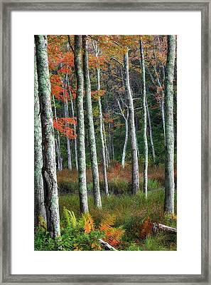 Into The Autumn Forest Framed Print by Bill Wakeley