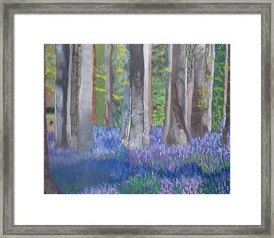 Into The Bluebell Wood Framed Print