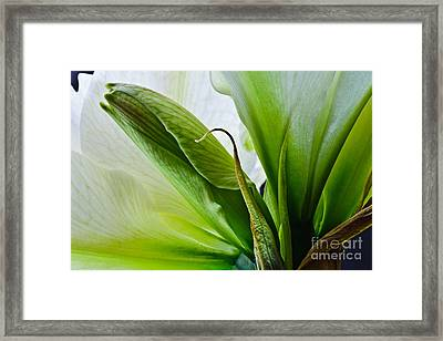 Into The Center 2012 Framed Print
