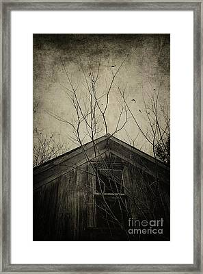 Into The Dark Past Framed Print by Trish Mistric