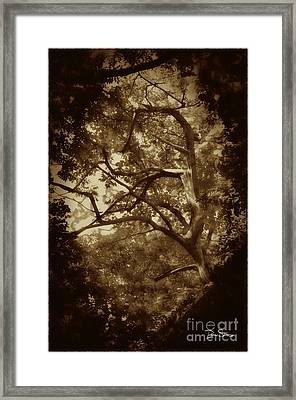 Into The Dark Wood Framed Print