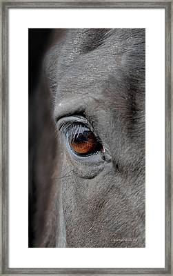 Into The Deep Framed Print by Renee Forth-Fukumoto