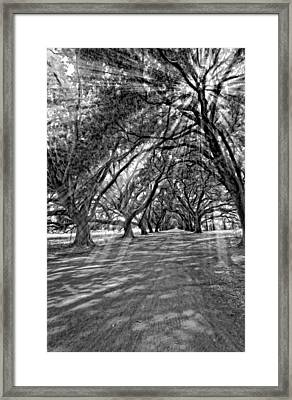 Into The Deep South Monochrome Framed Print by Steve Harrington