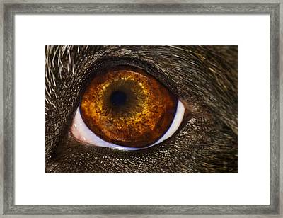 Framed Print featuring the photograph Into The Eye Of The Pit by Brian Cross