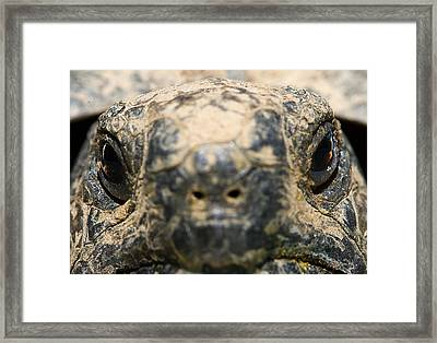 Into The Eyes Of The Beast Framed Print