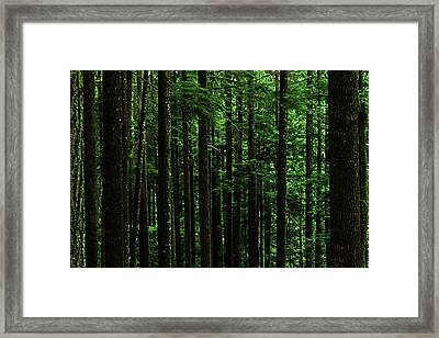 Into The Forest Darkly Framed Print