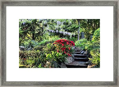Into The Garden Framed Print