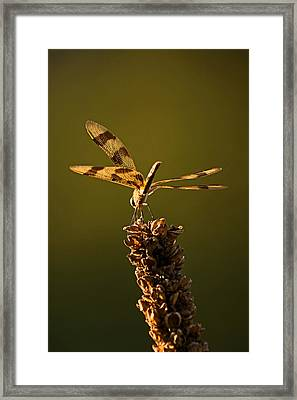 Into The Gloaming Framed Print