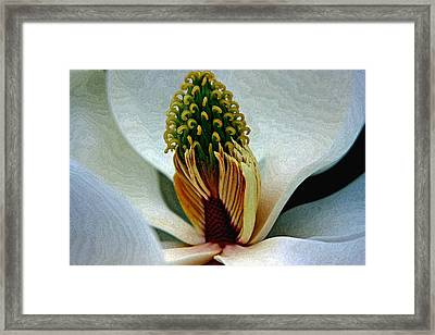 Into The Heart Of The Magnolia Drybrush Framed Print