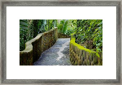 Into The Jungle Framed Print by Aged Pixel