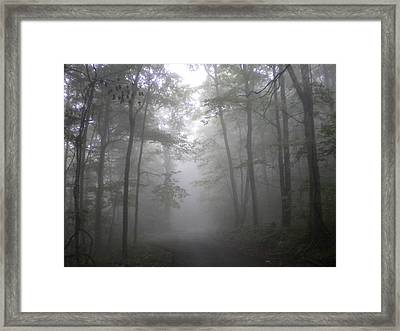 Framed Print featuring the photograph Into The Light by Diannah Lynch