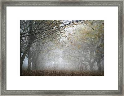 Into The Light Framed Print by Georgia Fowler