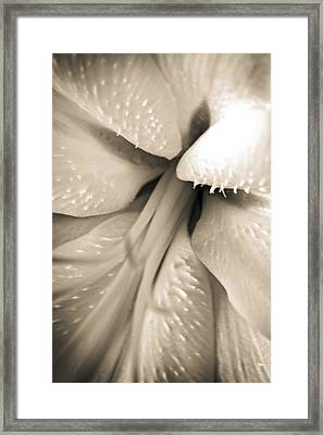 Into The Lily Framed Print