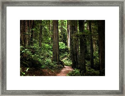 Into The Magical Forest Framed Print by Michelle Calkins