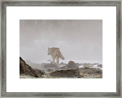 Framed Print featuring the photograph Into The Mist by Yeates Photography