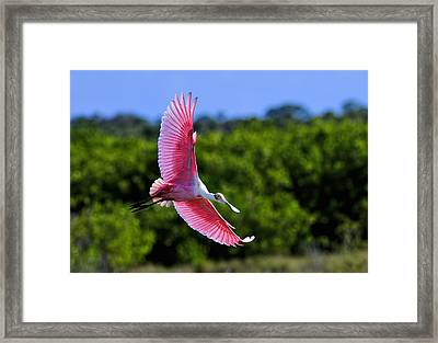 Into The Morning Light Framed Print